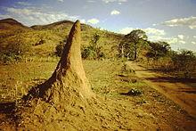 Termite_mound_Nyassa_lake